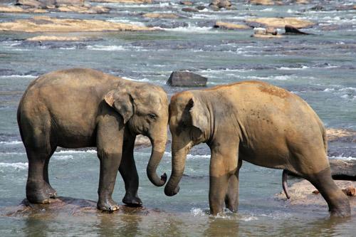 elephant-471480_1920-web