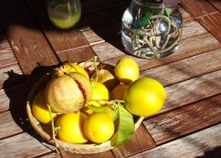 bewusst-reisen-Zitronen-Mallorca