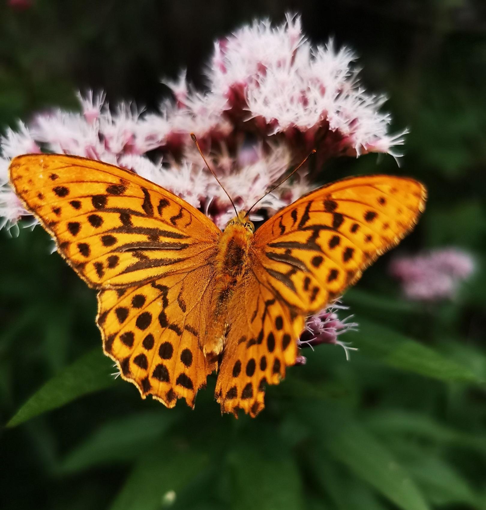 Wandern und Yoga, Spiritwanderung, Schmetterling