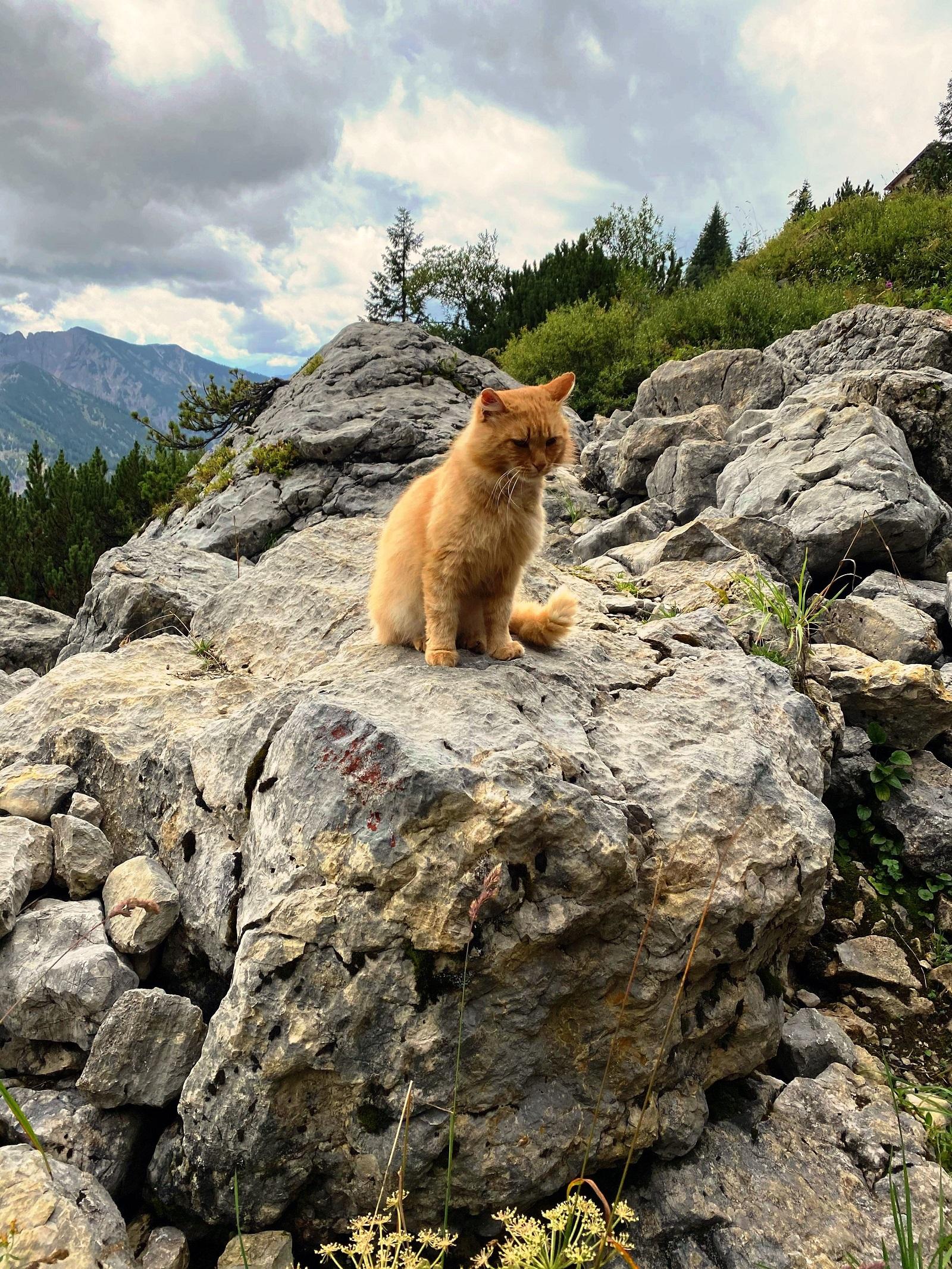 Wandern und Yoga, Spiritwanderung, Katze in den Bergen